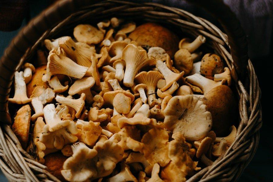 grzyby warzywa niskoweglowodanowe