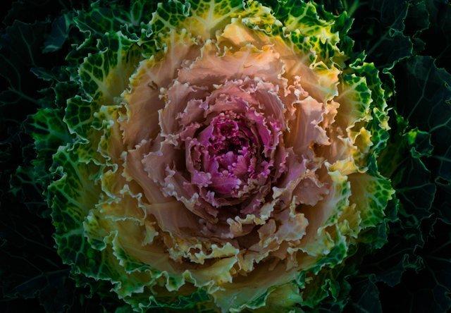 kapusta warzywa niskoweglowodanowe